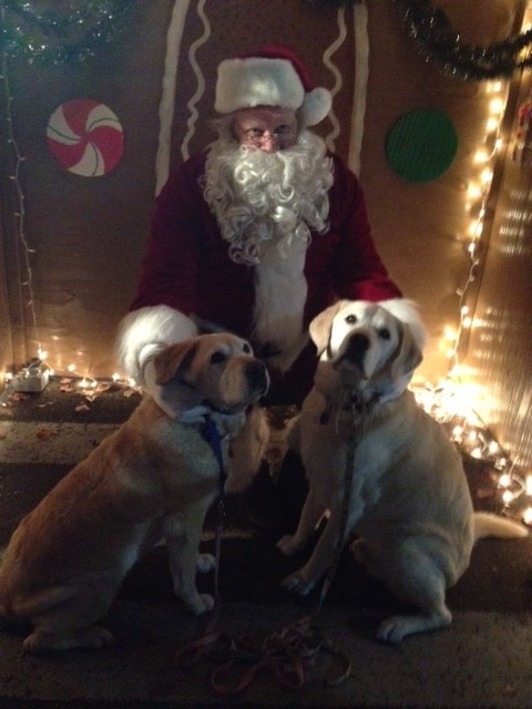 Happy Holidogs!