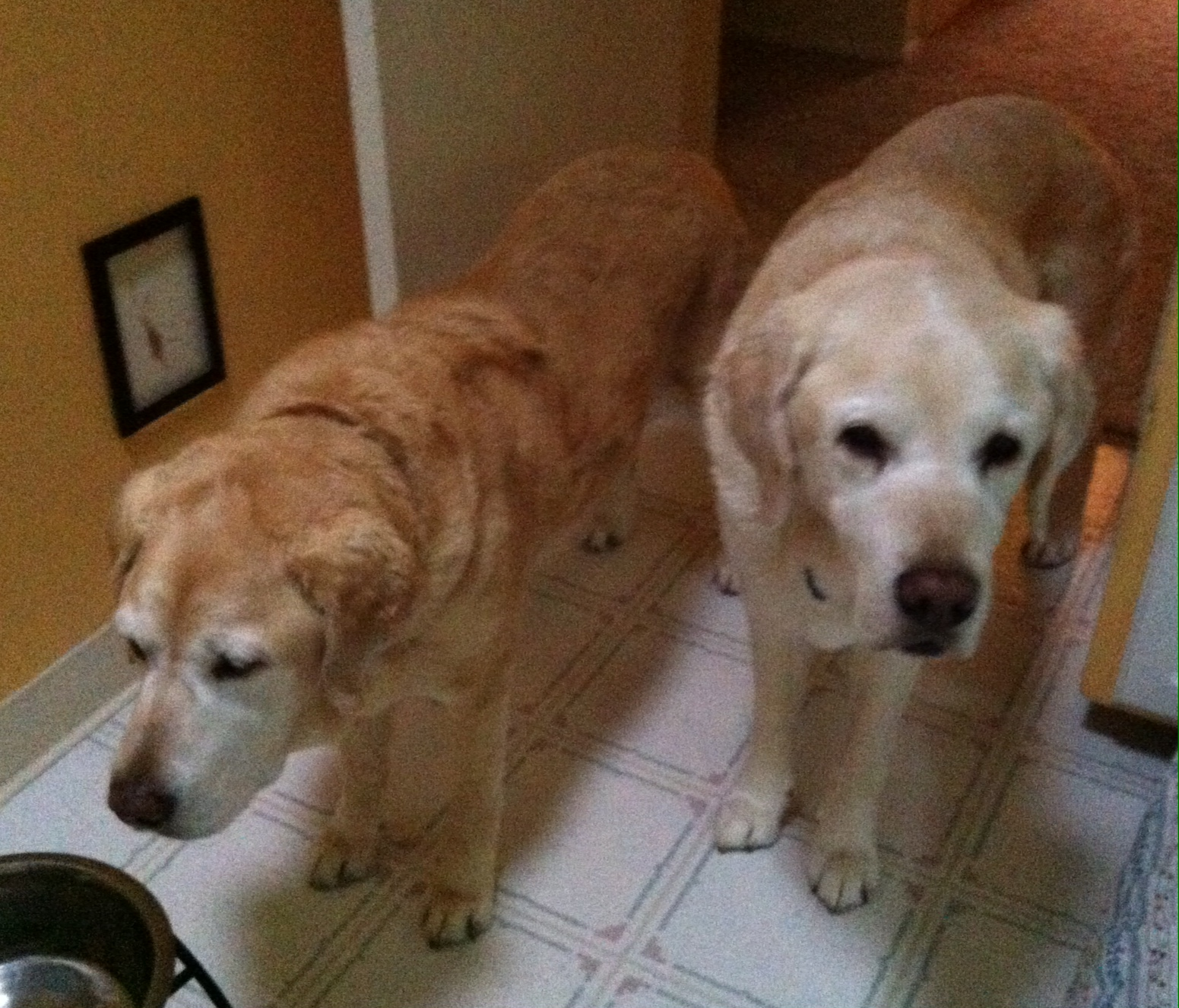 Chloe & Rincon, Where's dinner2